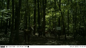 2012_REVIEWRANGE_BUSHNELL_TROPHYCAM-119476_0002