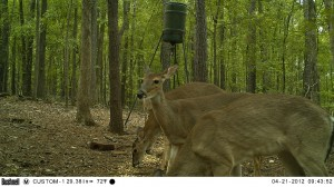 2012_REVIEWSAMPLE1_BUSHNELL_TROPHYCAM-119476_0001