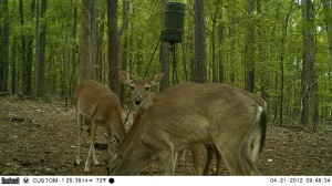 2012_REVIEWSAMPLE1_BUSHNELL_TROPHYCAM-119476_0003