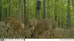 2012_REVIEWSAMPLE1_BUSHNELL_TROPHYCAM-119476_0005