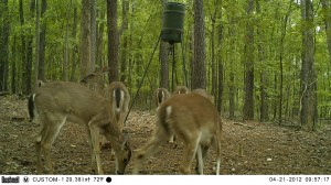 2012_REVIEWSAMPLE1_BUSHNELL_TROPHYCAM-119476_0008