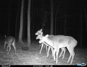 2012_REVIEWSAMPLE1_CUDDEBACK_AMBUSH_0001