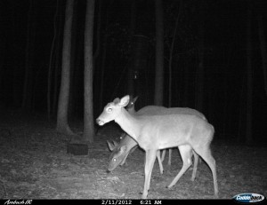 2012_REVIEWSAMPLE1_CUDDEBACK_AMBUSH_0002