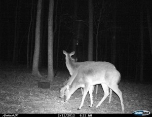 2012_REVIEWSAMPLE1_CUDDEBACK_AMBUSH_0003