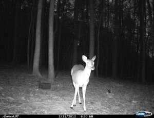 2012_REVIEWSAMPLE1_CUDDEBACK_AMBUSH_0007