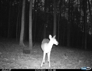 2012_REVIEWSAMPLE1_CUDDEBACK_AMBUSH_0008