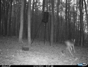 2012_REVIEWSAMPLE1_CUDDEBACK_AMBUSH_0009