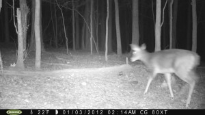 2012_REVIEWSAMPLE1_MOULTRIE_M80XT_0002