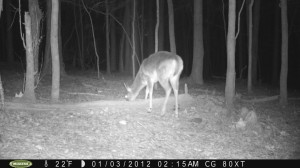 2012_REVIEWSAMPLE1_MOULTRIE_M80XT_0003