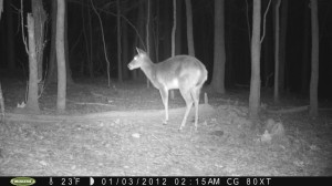 2012_REVIEWSAMPLE1_MOULTRIE_M80XT_0004