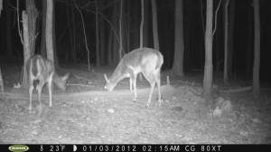 2012_REVIEWSAMPLE1_MOULTRIE_M80XT_0005