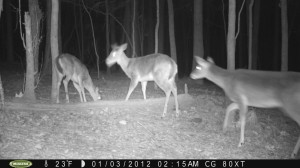 2012_REVIEWSAMPLE1_MOULTRIE_M80XT_0006