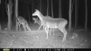 2012_REVIEWSAMPLE1_MOULTRIE_M80XT_0007