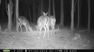 2012_REVIEWSAMPLE1_MOULTRIE_M80XT_0008