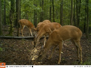 2013_REVIEWSAMPLE_BUSHNELL_TROPHYCAMHDMAX_0001