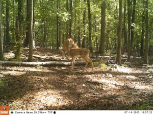 2013_REVIEWSAMPLE_BUSHNELL_TROPHYCAMHDMAX_0004