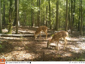 2013_REVIEWSAMPLE_BUSHNELL_TROPHYCAMHDMAX_0005