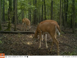 2013_REVIEWSAMPLE_BUSHNELL_TROPHYCAMHDMAX_0008