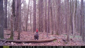 2013_REVIEWSAMPLE2_MOULTRIE_M-990_0001