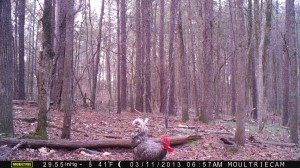 2013_REVIEWSAMPLE2_MOULTRIE_M-990_0002