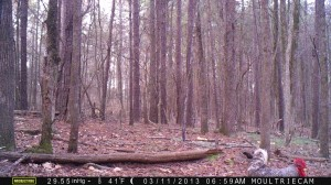 2013_REVIEWSAMPLE2_MOULTRIE_M-990_0003