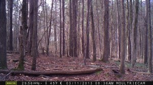 2013_REVIEWSAMPLE2_MOULTRIE_M-990_0005