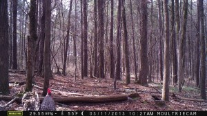 2013_REVIEWSAMPLE2_MOULTRIE_M-990_0006