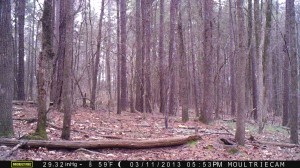 2013_REVIEWSAMPLE2_MOULTRIE_M-990_0007