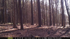 2013_REVIEWSAMPLE1_MOULTRIE_M-800_0012