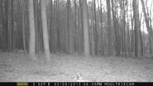 2013_REVIEWSAMPLE1_MOULTRIE_M-800_0014