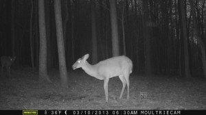 2013_REVIEWSAMPLE1_MOULTRIE_M-800_0016