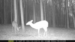 2013_REVIEWSAMPLE1_MOULTRIE_M-800_0017