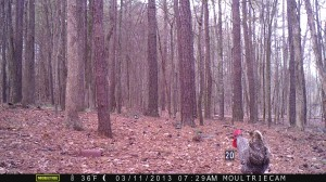 2013_REVIEWSAMPLE2_MOULTRIE_M-800_0001