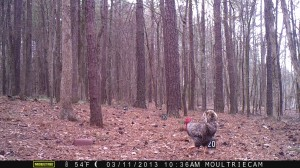 2013_REVIEWSAMPLE2_MOULTRIE_M-800_0003