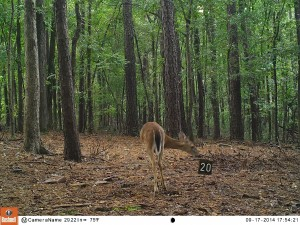 2014_REVIEWSAMPLE_BUSHNELL_Trophy Cam HD Max 119678_0018