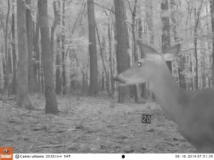 2014_REVIEWSAMPLE_BUSHNELL_Trophy Cam HD Max 119678_0022