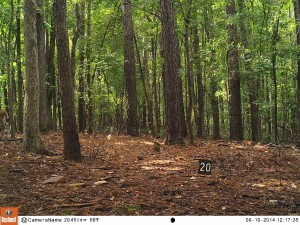 2014_REVIEWSAMPLE_BUSHNELL_Trophy Cam HD Max 119678_0023