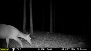 2014_REVIEWSAMPLE_MOULTRIE_M-880i_0019