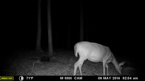 2014_REVIEWSAMPLE_MOULTRIE_M-880i_0020