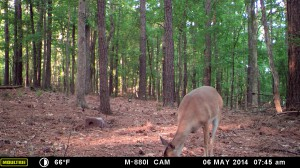 2014_REVIEWSAMPLE_MOULTRIE_M-880i_0022