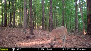 2014_REVIEWSAMPLE_MOULTRIE_M-880i_0023