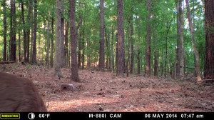 2014_REVIEWSAMPLE_MOULTRIE_M-880i_0024