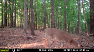 2014_REVIEWSAMPLE_MOULTRIE_M-880i_0025