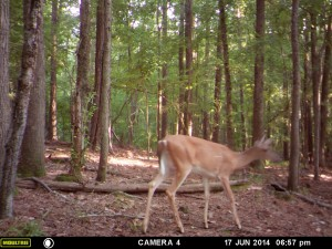 2014_REVIEWSAMPLE_MOULTRIE_A8_0002
