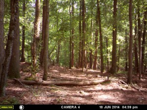 2014_REVIEWSAMPLE_MOULTRIE_A8_0004