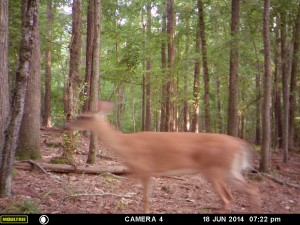2014_REVIEWSAMPLE_MOULTRIE_A8_0005