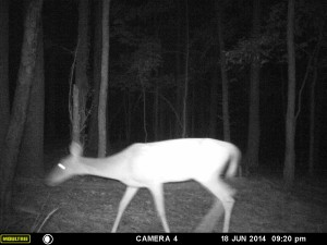 2014_REVIEWSAMPLE_MOULTRIE_A8_0006