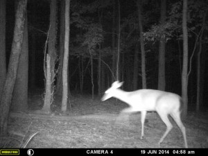 2014_REVIEWSAMPLE_MOULTRIE_A8_0008