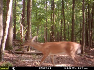 2014_REVIEWSAMPLE_MOULTRIE_A8_0009