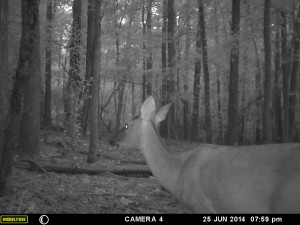 2014_REVIEWSAMPLE_MOULTRIE_A8_0011